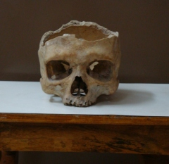 The Skull - cut from top for studying
